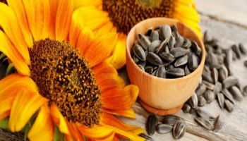 ما هو لب عباد الشمس وفوائده على الصحة